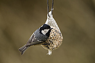 Germany, Hesse, Coal tit on bird feeder - SR000051