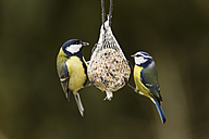 Germany, Hesse, Great tit and blue tit on bird feeder - SR000054