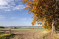 Germany, Hesse, Farmland in autumn with oak tree in foreground - CB000053