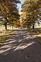 Germany, Hesse, Oak treelined avenue in autumn - CB000043