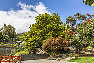 Spain, Gran Canaria, View of garden - MAB000023