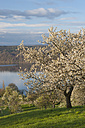 Germany, Bavaria, Cherry trees with Lake Constance over meadow - SH000686