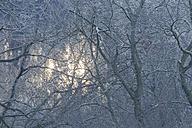 Germany, Hesse, Frosty twigs in winter - SRF000075