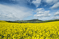 Germany, Baden Wuerttemberg, View of Yellow rape field - EL000149