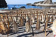 Portugal, Stockfish for drying at Camara de Lobos near Funchal - AMF000162