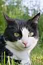 Germany, Cat sitting in grass, close up - LV000080
