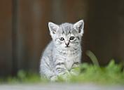 Germany, Baden Wuerttemberg, Kitten sitting in front of door - SLF000224