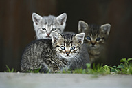 Germany, Baden Wuerttemberg, Kittens sitting in front of door - SLF000220