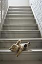 Teddybear on steps - FMKYF000443