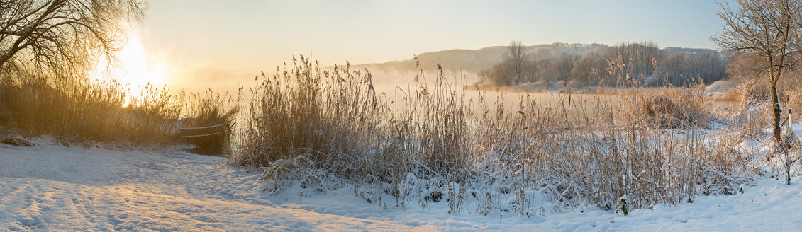 Germany, Ludwigshafen, Snow covered reed at shore - SH000762