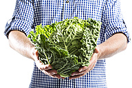 Mature man holding savoy cabbage against white background, close up - MAEF006874