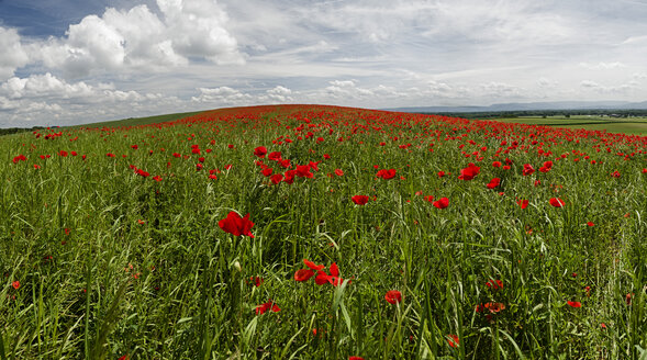 France, View of Corn poppies field near Seltz - JOKF000025