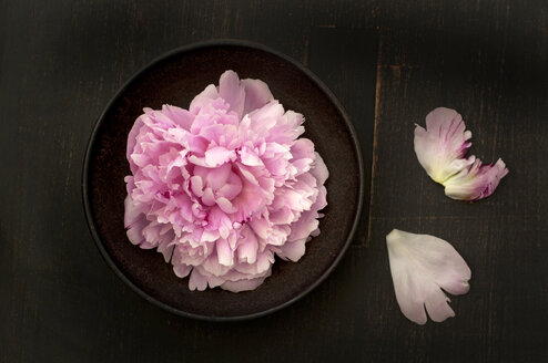 Bowl of peonies on wooden table, close up - OD000170