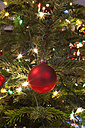 Red christmas bauble hanging on tree, close up - SKF001328