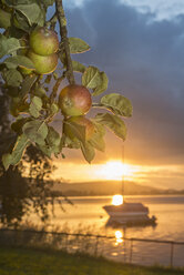 Switzerland, View of Apples branch and sailing boat during sunset - SH000796