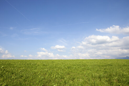 Germany, Bavaria, Green field on sunny day - SKF001343
