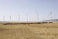 Spain, View of wind turbine and cattles in field - SKF001377