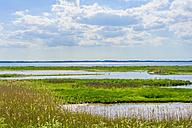 Germany, Schleswig Holstein, View of Nature Reserve Geltinger Birk - MJF000283