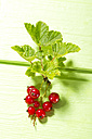 Red currants with shrubs on wooden table, close up - MAEF006940