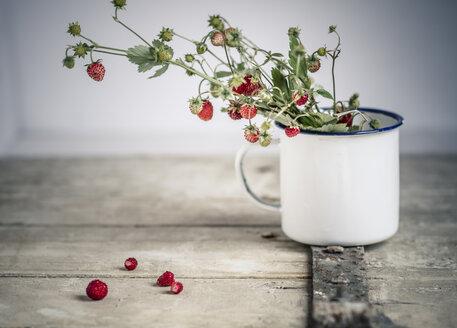 Germany, Baden Wuerttemberg, Bouquet of wild strawberries in enamel cup on old wooden door - SBDF000106