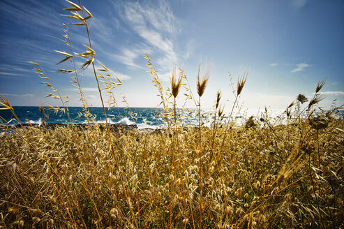 Italy, View of Wild Oat at Ionean sea - DIKF000042