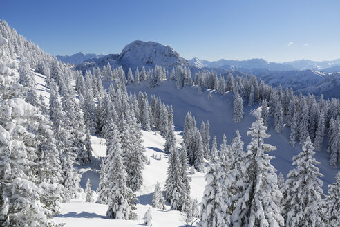 Germany, Bavaria, Snow covered spruces at Tegelberg Mountain - SIEF004148