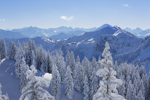 Germany, Bavaria, Snow covered spruces at Tegelberg Mountain - SIEF004149