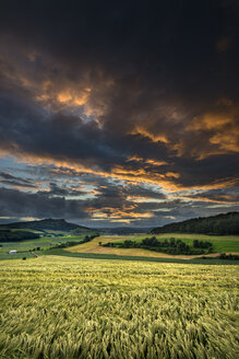 Germany, Baden Wuerttemberg, Constance, View of wheat field in sunset - ELF000300