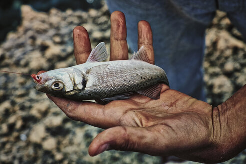 Italy, Apulia, Man holding fresh fish on coast - DIK000053