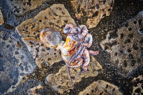 Italy, Apulia, Octopus fallen on ground in fish market - DIK000050
