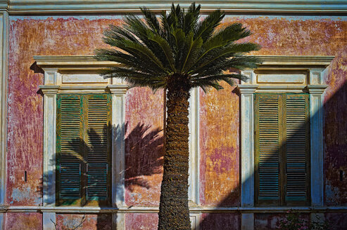 Italy, Apulia, Palm tree in front of abandoned house - DIK000047