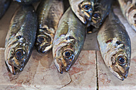 Portugal, Lagos, Horse mackerel fish - WDF001900