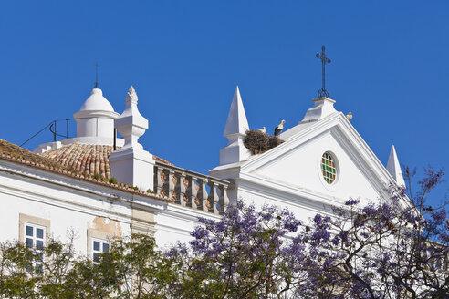 Portugal, Faro, Storks perching in birds nest on Misericordia Church - WDF001832