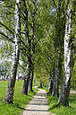 Germany, Treelined with pathway - LB000234
