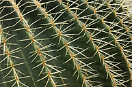 Thorns of golden barrel cactus, close up - RUEF001079