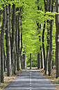 Netherlands, Treelined track through deciduous forest - RUE001093