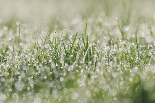 Germany, Bavaria, Dew on grass, close up - RUEF001095