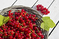 Germany, Bavaria, Red currants in basket - SARF000092