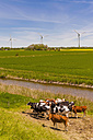 Germany, Schleswig-Holstein, View of cows in field with wind turbine in background - MJF000329