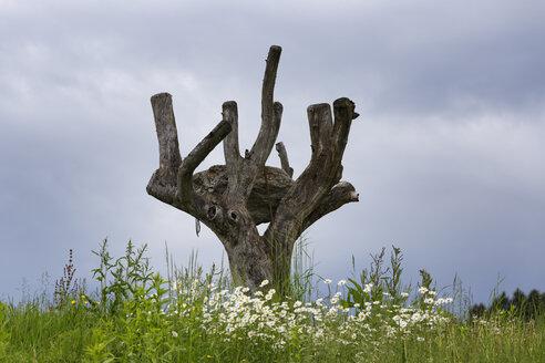 Austria, Carinthia, View of Land Art skulpture - SIE004252