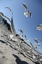 Germany, Mecklenburg-Western Pomerania, Seagull flying against beach - STB000028