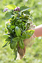 Germany, Bavaria, Girl holding bunch of fresh herbs, close up - STB000050