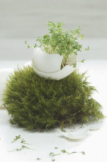 Easteregg, cress in egg shell, in moss (Sphagnum fallax) nest, studio - ASF005112