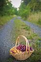 Mirabelles in a basket - MJF000380