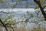 Fisherman at lake Tegernsee, Bavaria, Germany - AX000482