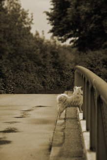 Germany, Bavaria, Dornach, dog on a bridge - AX000486