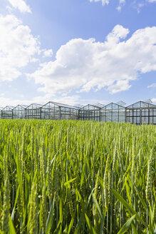 Germany, Baden-Wuerttemberg, Fellbach, wheatfield and greenhouses - WDF001939