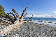 Canada, British Columbia, Vancouver Island, French Beach Provincial Park - FOF005247