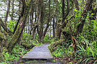 Canada, British Columbia, Vancouver Island, Botanical Beach Park - FOF005256