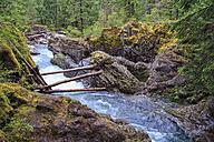 Canada, British Columbia, Vancouver Island, Little Qualicum Falls Provincial Park - FOF005276